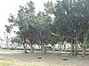 Dscn0130